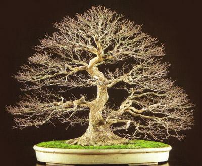 Tu amor es como un bons i mental storm - Como se cuida un bonsai ...